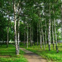 俄罗斯Russia阿穆尔州--Архара阿尔哈拉区--白桦林, Архара