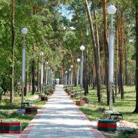 Аллея в городском парке, Белогорск