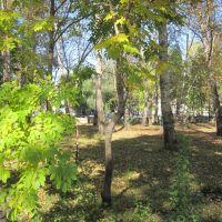 парк, Завитинск