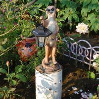 Красивый сад моих друзей, Зея
