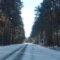 Сосновый бор села Верное, Ромны