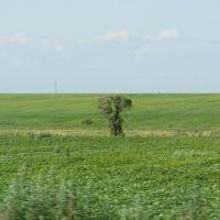 Lonely Tree / Одинокое дерево, Ромны