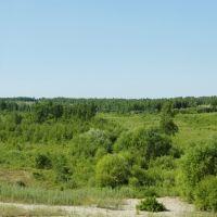 Roadside Forests / Придорожные леса, Ромны
