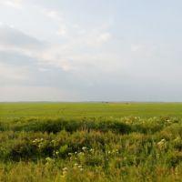 Fields / Поля, Ромны