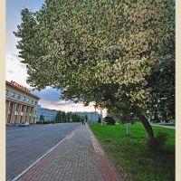 Яблоня, Архангельск