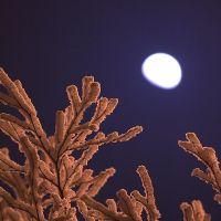 Moon n frost, Архангельск