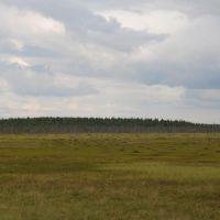 Большое болото...  www.jeszczedalej.pl, Емца