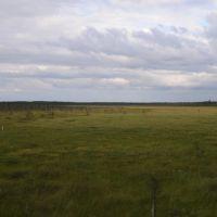 Бескрайнее болото... www.jeszczedalej.pl, Емца