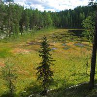 болото возле озера Глубокое, Емца