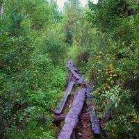 старая МОСТОВАЯ в лесу, Карпогоры