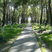 Аллея, Новодвинск