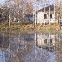 дикие утки на городском пруду, Няндома