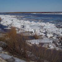 Подвижки льда в Холмогорском разветвлении, Холмогоры