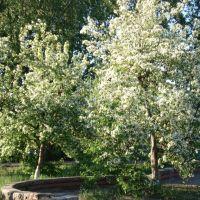 Весна в Шенкурске., Шенкурск