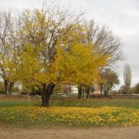 Островок золотой осени, Нариманов