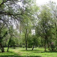 Зелень, Ахтубинск
