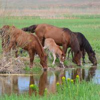 Horses, Володарский