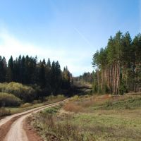 Лес, Верхние Татышлы
