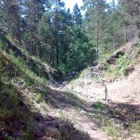 Лес в окрестностях Зилаира, Зилаир