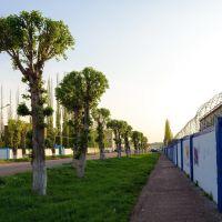 Ишимбайские пальмы, Ишимбай