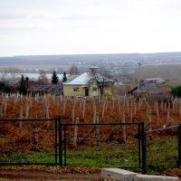 Виноградник, Кушнаренково