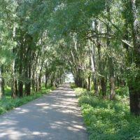 лес, Кушнаренково