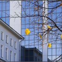 Последние листья, Уфа