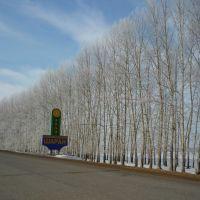 Северные ворота села Шаран, Шаран