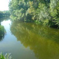 река Оскол, Волоконовка