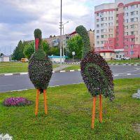 Улица Севостопольская, Губкин