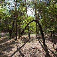 В лесу., Новый Оскол