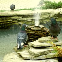 Любовь и голуби, Строитель