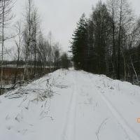 Дорога к ГРЭС со стороны леса, Белые Берега