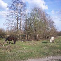 Лошадки !!! (бедные животные...), Большое Полпино