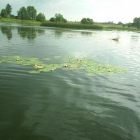 Lake, Бытошь