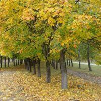 Вот и осень пришла, Клинцы