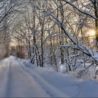 o tom, chto lyzhnik vidit v lesu, esli ne polenitsya rano vstat…, Кокаревка