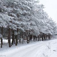 Зима в Навле, Навля