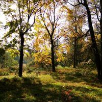 золотые деревья, Дятьково