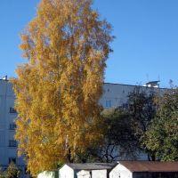 Золотая осень, Дятьково