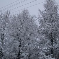 First Snow, Багдарин