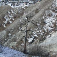Дерево на склоне, Багдарин