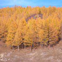 Золотая осень, Багдарин