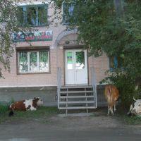 Зоомагазин ))), август 2010г., Селенгинск