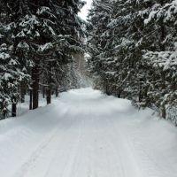 Лес - Андреево, Владимирская область, Андреево