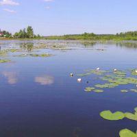 озеро в г.Гусь-Хрустальный, Анопино