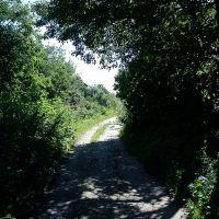 дорога в саду, Вязники
