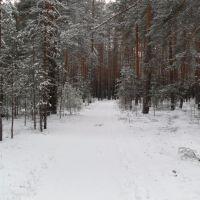 зимний лес 12.10г., Золотково