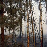Forest Fire, Иванищи