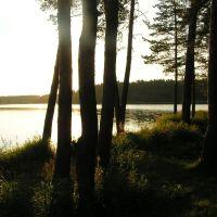 Киржачское озеро, лес, Киржач